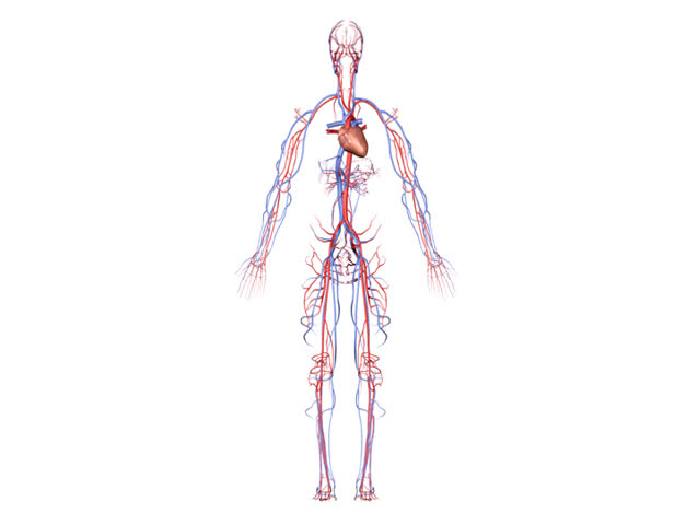 NTSC Circulatory System