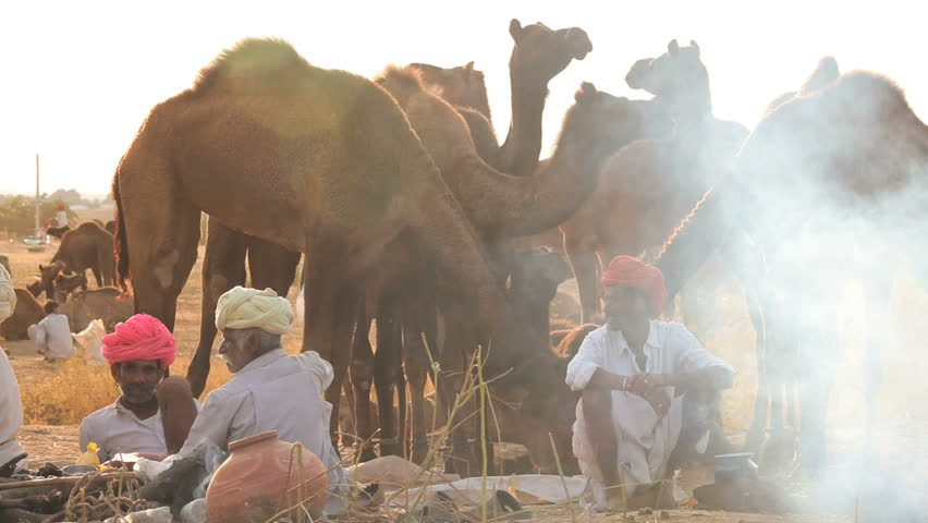 INDIA - DECEMBER 2012: Tribesmen cooking while at Camel Fair, Pushkar, Rajasthan, India - HD stock video clip