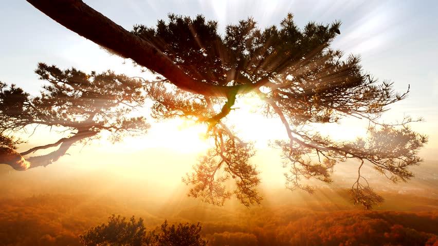 silhouette of tree at sunset magic hour. sundays shining background
