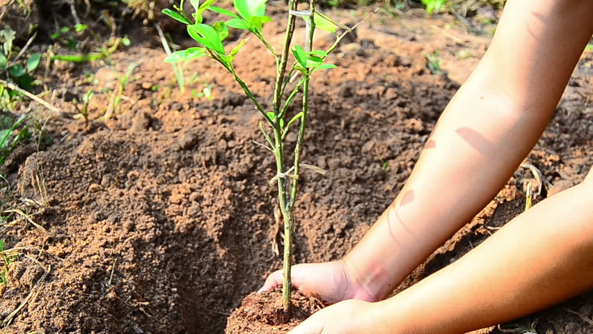 Plant,Tree,Male hand planting young tree - HD stock footage clip