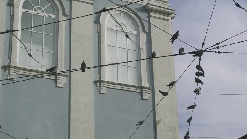 Lisbon, Portugal, November 18th, 2014 - Birds rest on the tramline cables in Lisbon's Barrio Alto district. Flat Graded for your own post production
