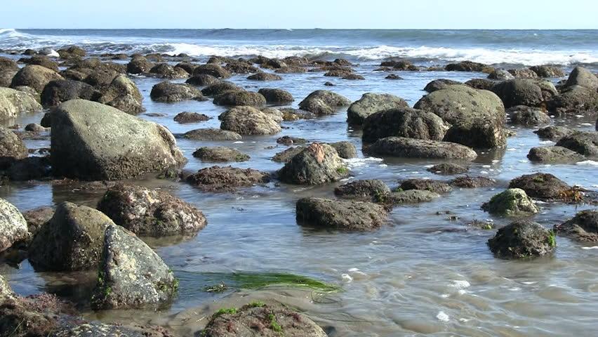 Pacific Tide Pools   Shutterstock HD Video #804010