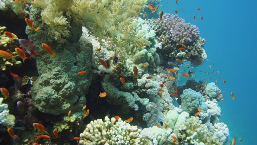 Colorful underwater offshore rocky reef with coral and sponges and small tropical fish swimming by in a blue ocean - HD stock video clip