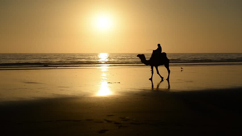 A berber riding a camel across the bridge made by the setting sun in the surface of a wet sand beach in Agadir, Morocco.