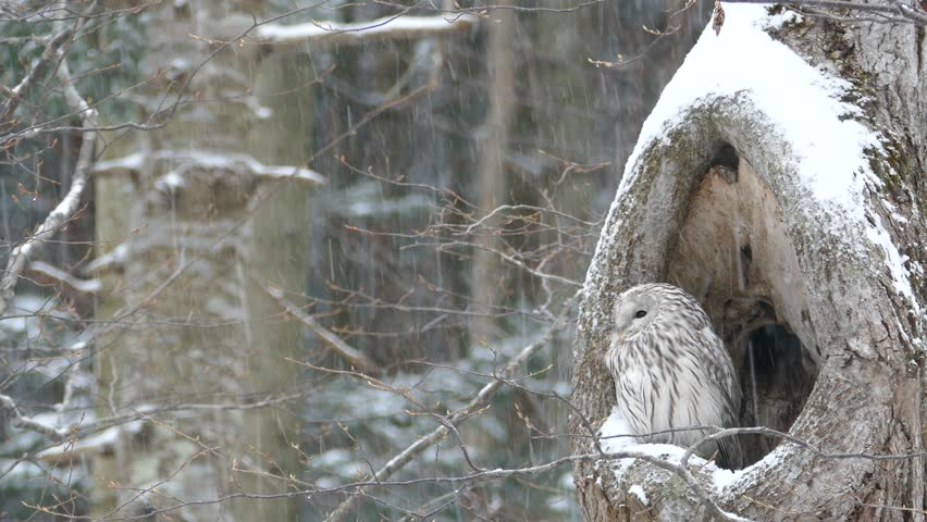 Image result for An owl in a snow landscape