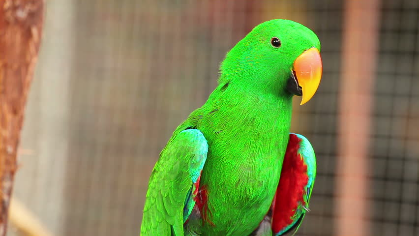 Best Food For African Grey And Eclectus