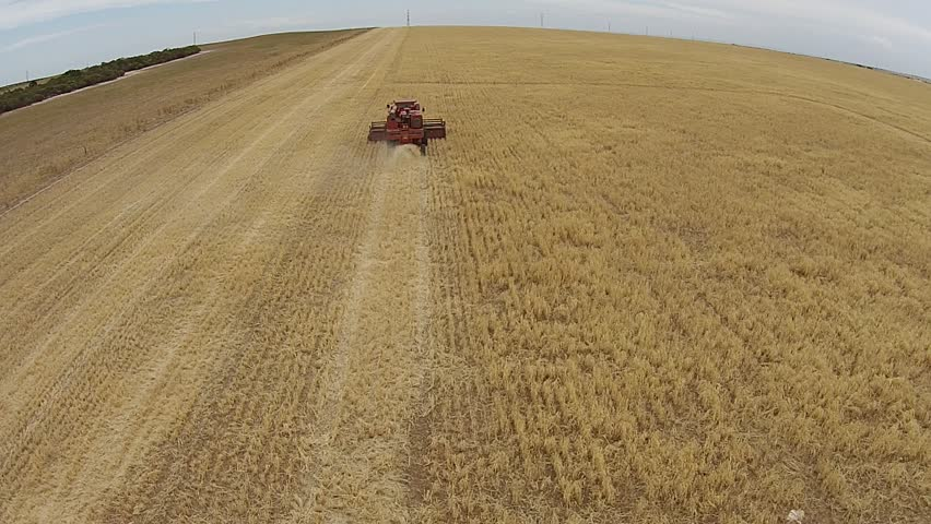 Aerial footage of vintage harvester, harvesting hay paddock in rows, around huge paddock in drought stricken dry land farming area of Australia and filling grain silo read for stock piling
