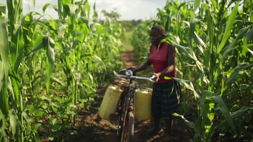 MOSHI, TANZANIA - MARCH 2013: An African girl pushing a bike carrying water through a field full of crops