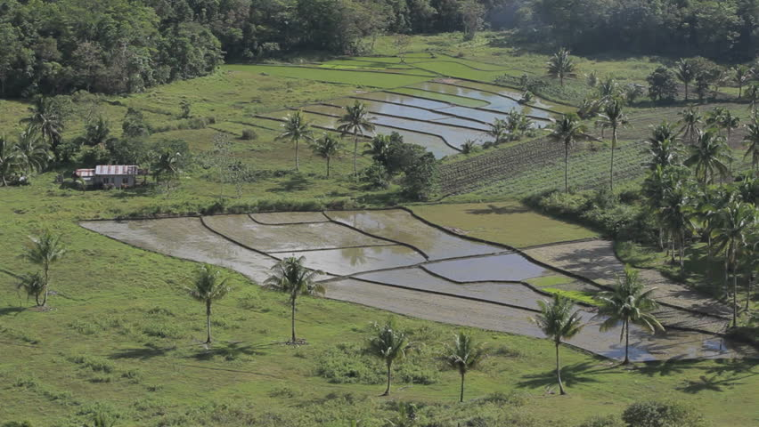 Rice terraces with water reflection. Bohol. Philippines