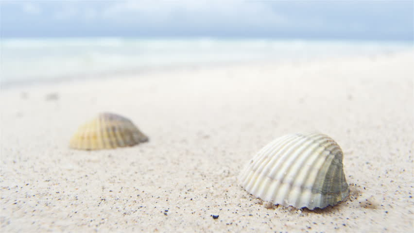 Shells on white beach sand by the sea