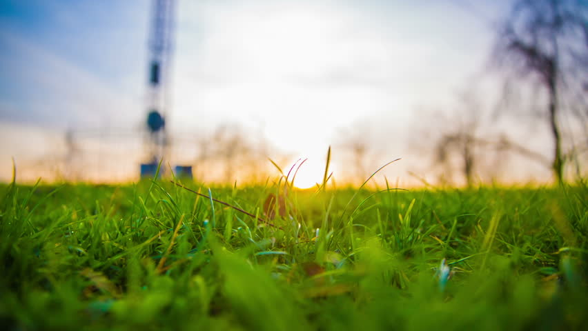 Low Angle Shot Following Green Grass Stock Footage Video