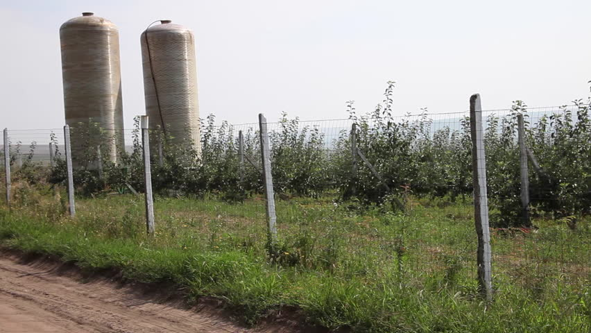 Young trees, apple orchard, rows, sapling, beautiful landscape, agriculture