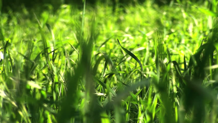 Recycle symbol and grass  - HD stock video clip