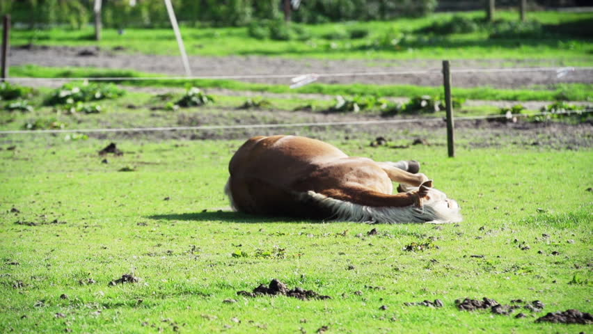 Horse rolling on the ground stock footage video