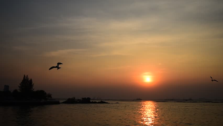 Bird Flying With Sunse...