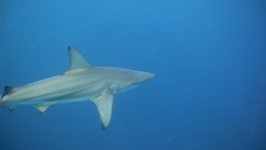 black tip shark bite - photo #43