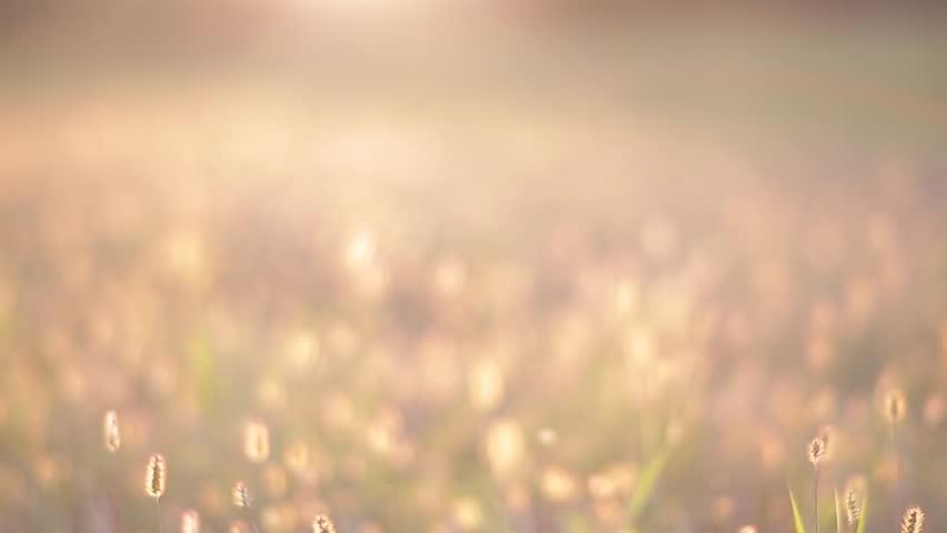 Camera walk through the meadow.