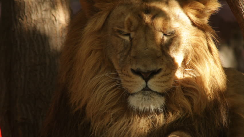 from Jorge sunny lion sex porn pic