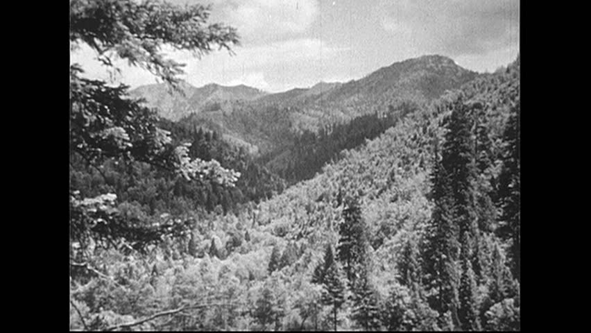 UNITED STATES 1940s: Hand touches sapling / View of forest, tree stumps.