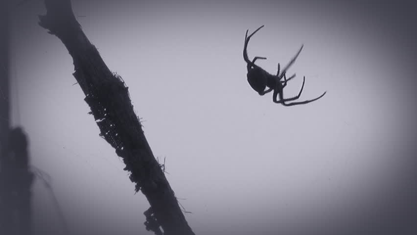 Spider on the web - HD stock video clip