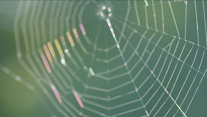 The spider web (cobweb) closeup background. - HD stock footage clip