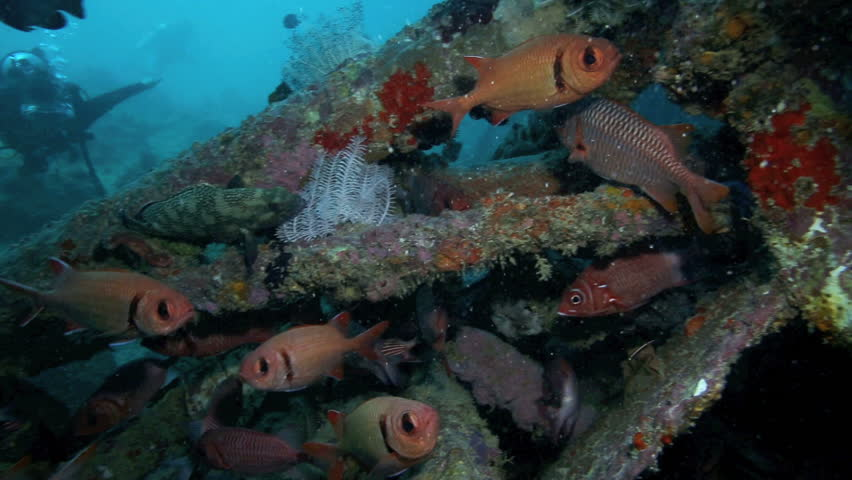Scuba divers watch fish swimming around an artificial reef for Fish swimming video