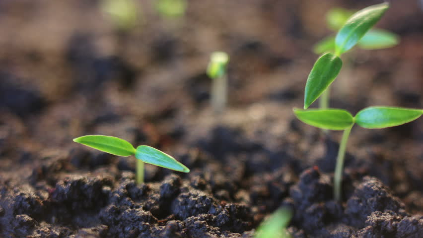 plants growing time lapse - HD stock footage clip