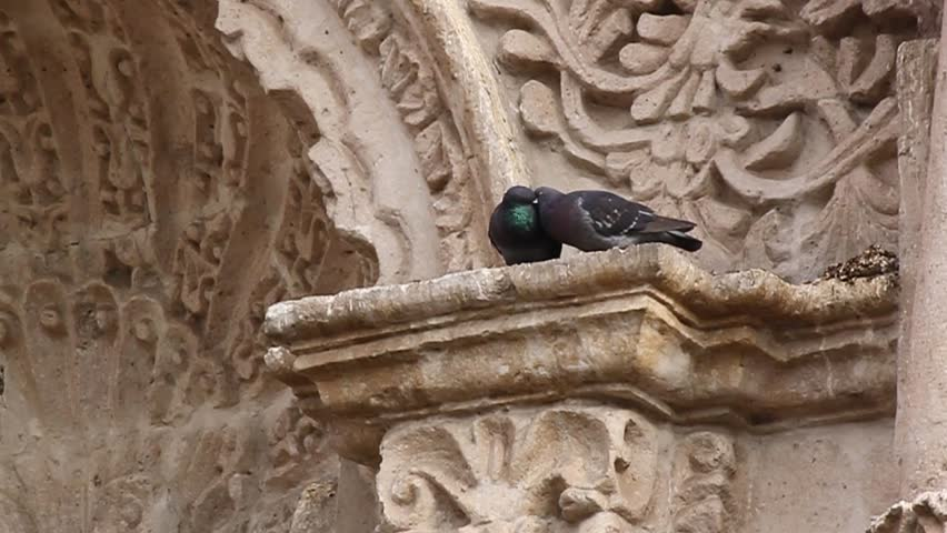 two doves kissing while sitting on a picturesque stone wall, Arequipa, Peru